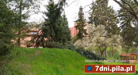 Wycięte drzewa na posesji ministra Jana Szyszko w Tucznie