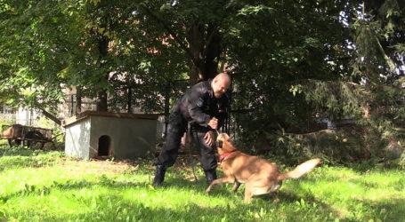 Oddaj psa do służby w policji