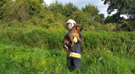 Strażacy z OSP w Wysokiej uratowali psa