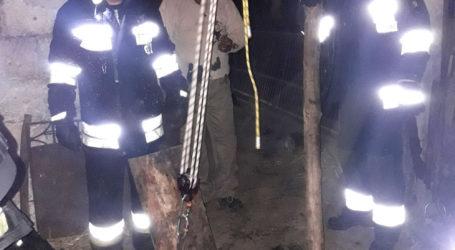 Strażacy uratowali byka