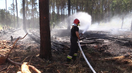 Palił się las pod Piłą