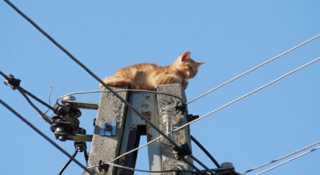 Kotek uratowany