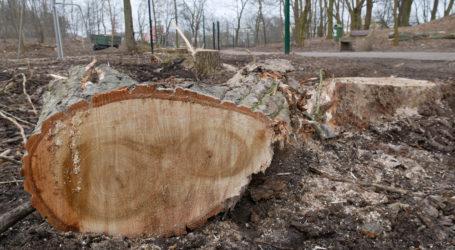 Wycinka drzew w parku na Ceglanej