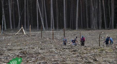27 milionów nowych drzew posadzą w pilskich lasach w 2019 roku