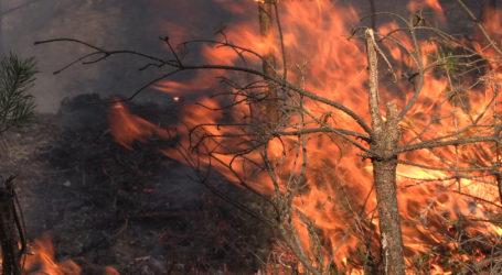 Potężny pożar lasu koło Trzcianki. Zobacz zdjęcia!