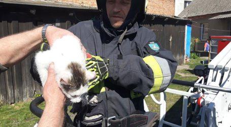 Strażacy uratowali małego kotka