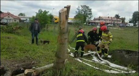 Strażacy uwolnili młodą sarnę