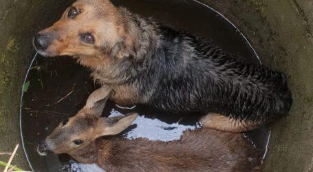 Strażacy uratowali sarnę i psa