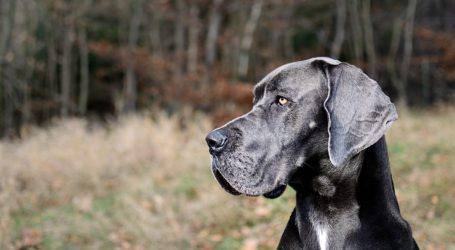 668 psów umarło w pilskim schronisku