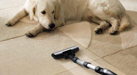 Pies a odkurzacz – jak go oswoić z urządzeniem?