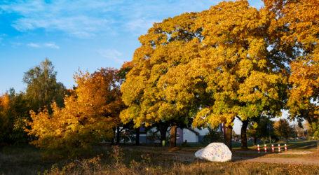 Jesień na całego – AKTUALIZACJA
